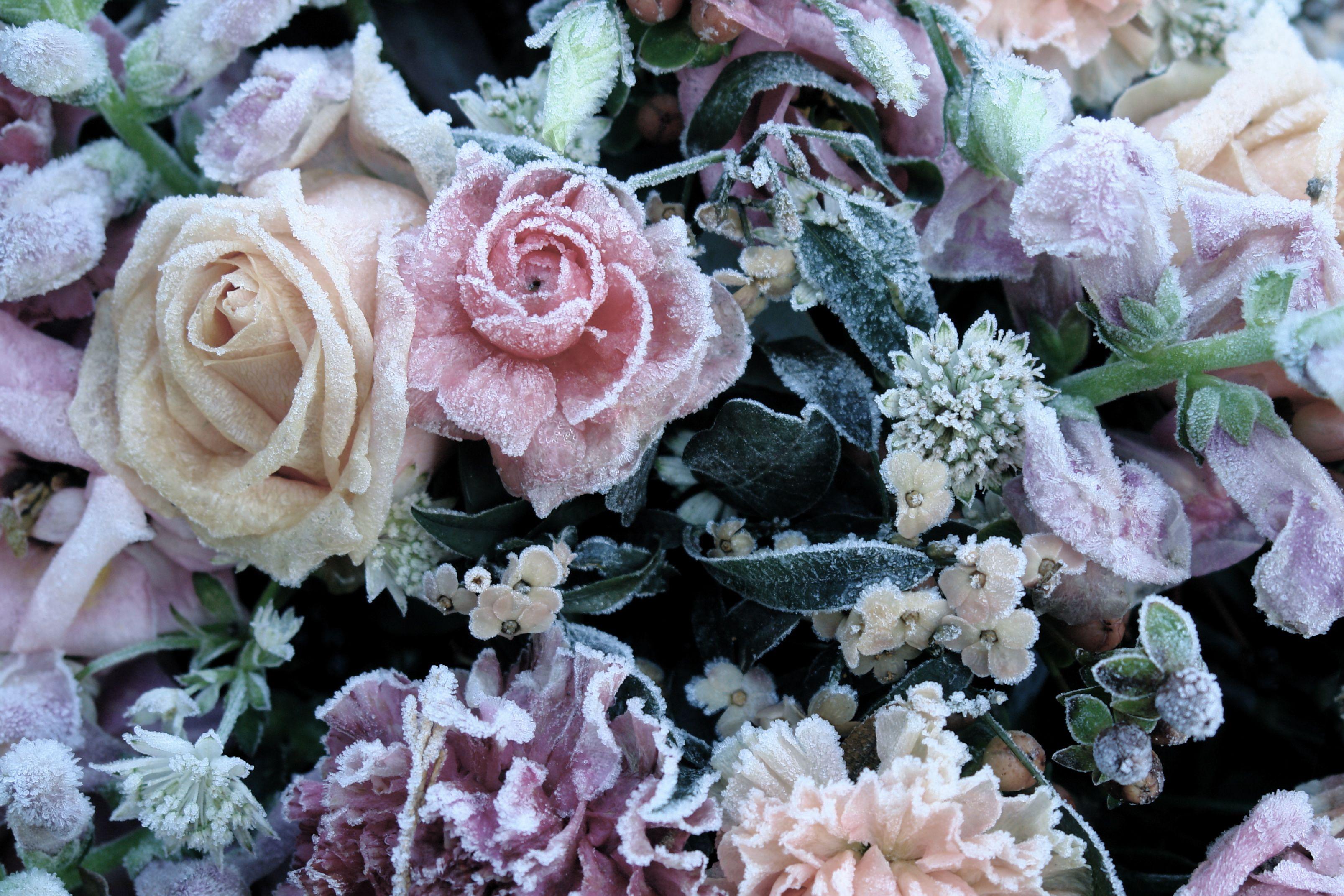 frozen flowers Ice Flowers