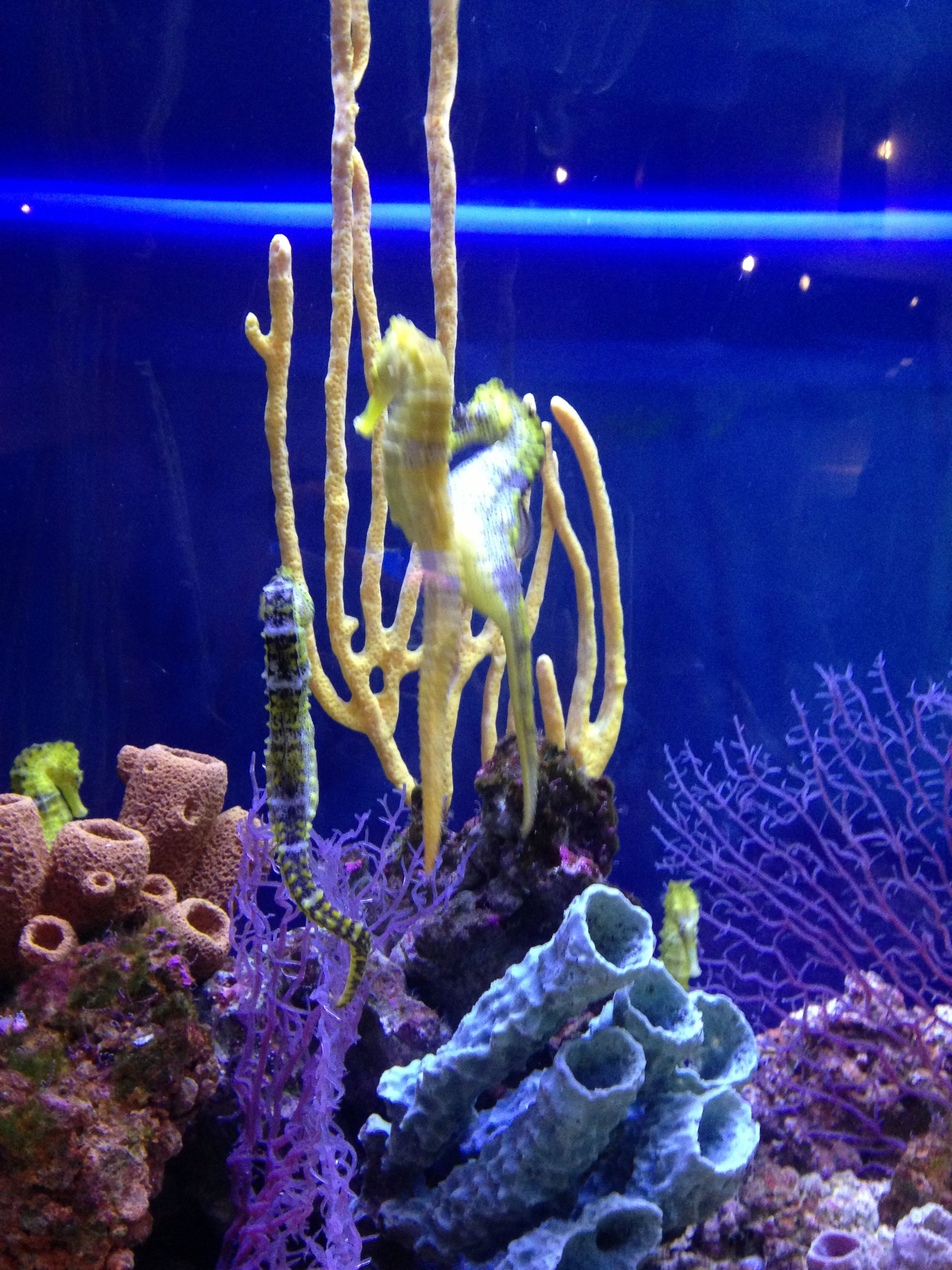Birch Aquarium La Jolla Ca My Memorable Adventures And