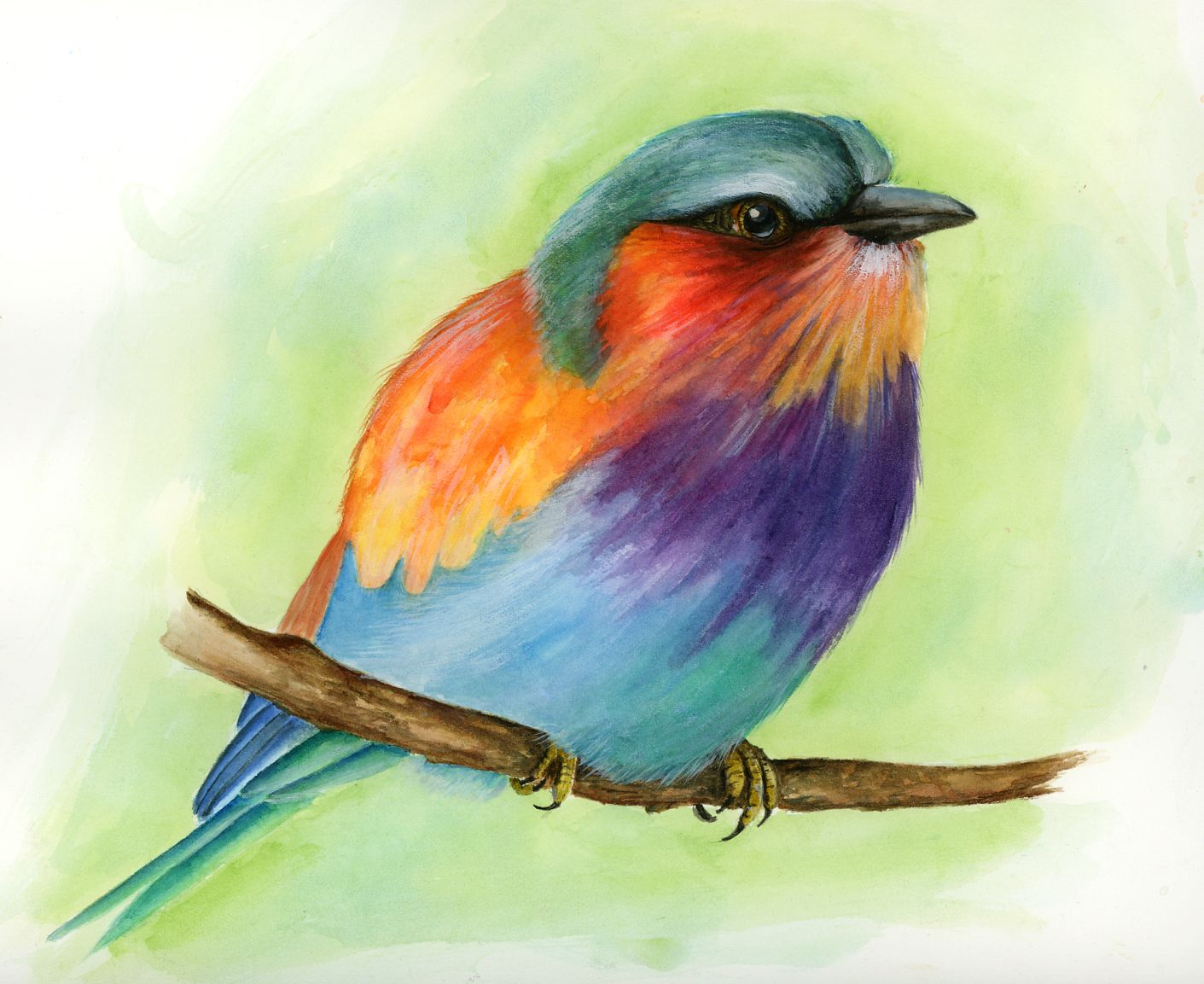 Watercolor pictures of birds
