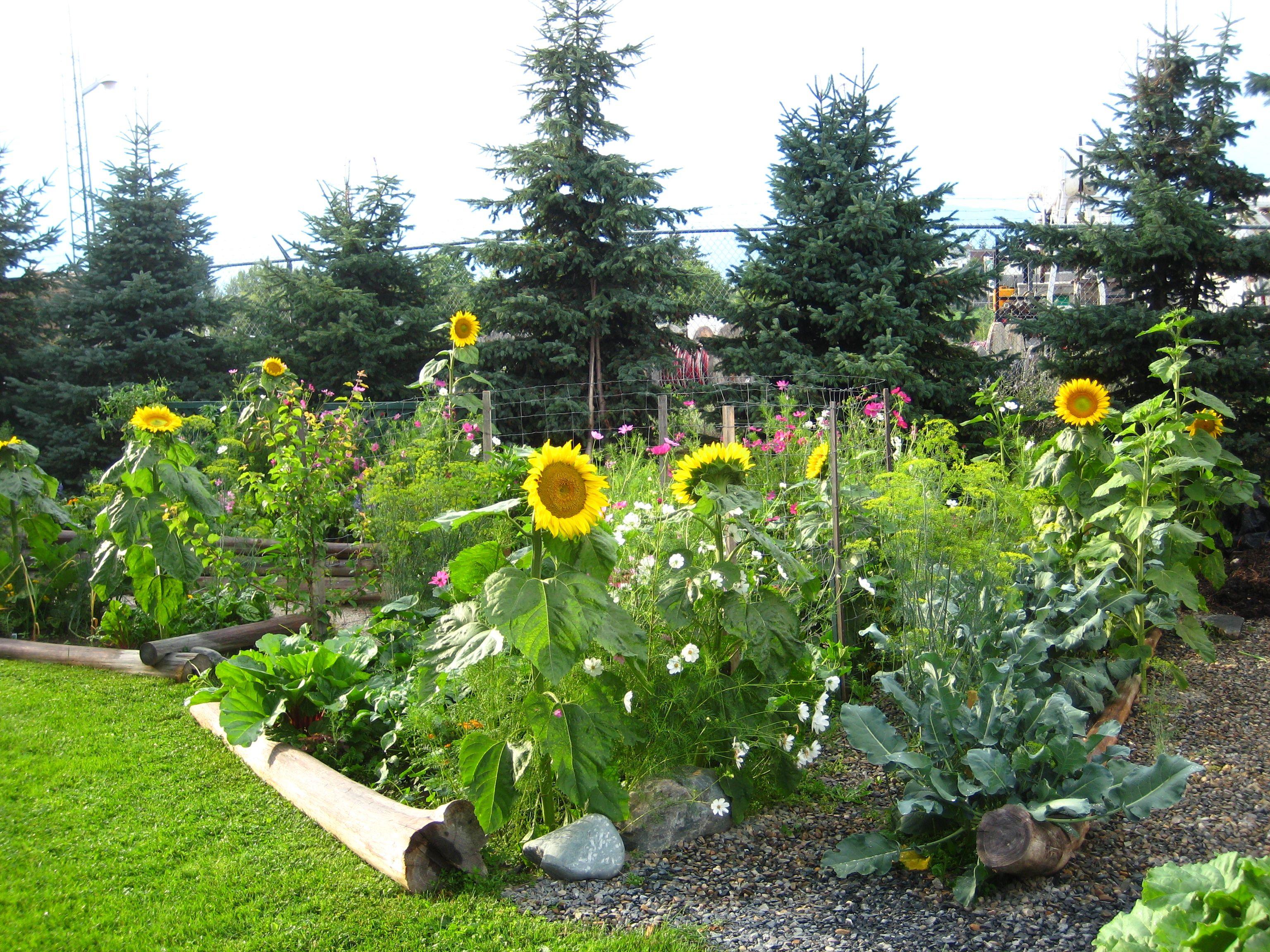 My garden in my garden pinterest for Landscape my garden