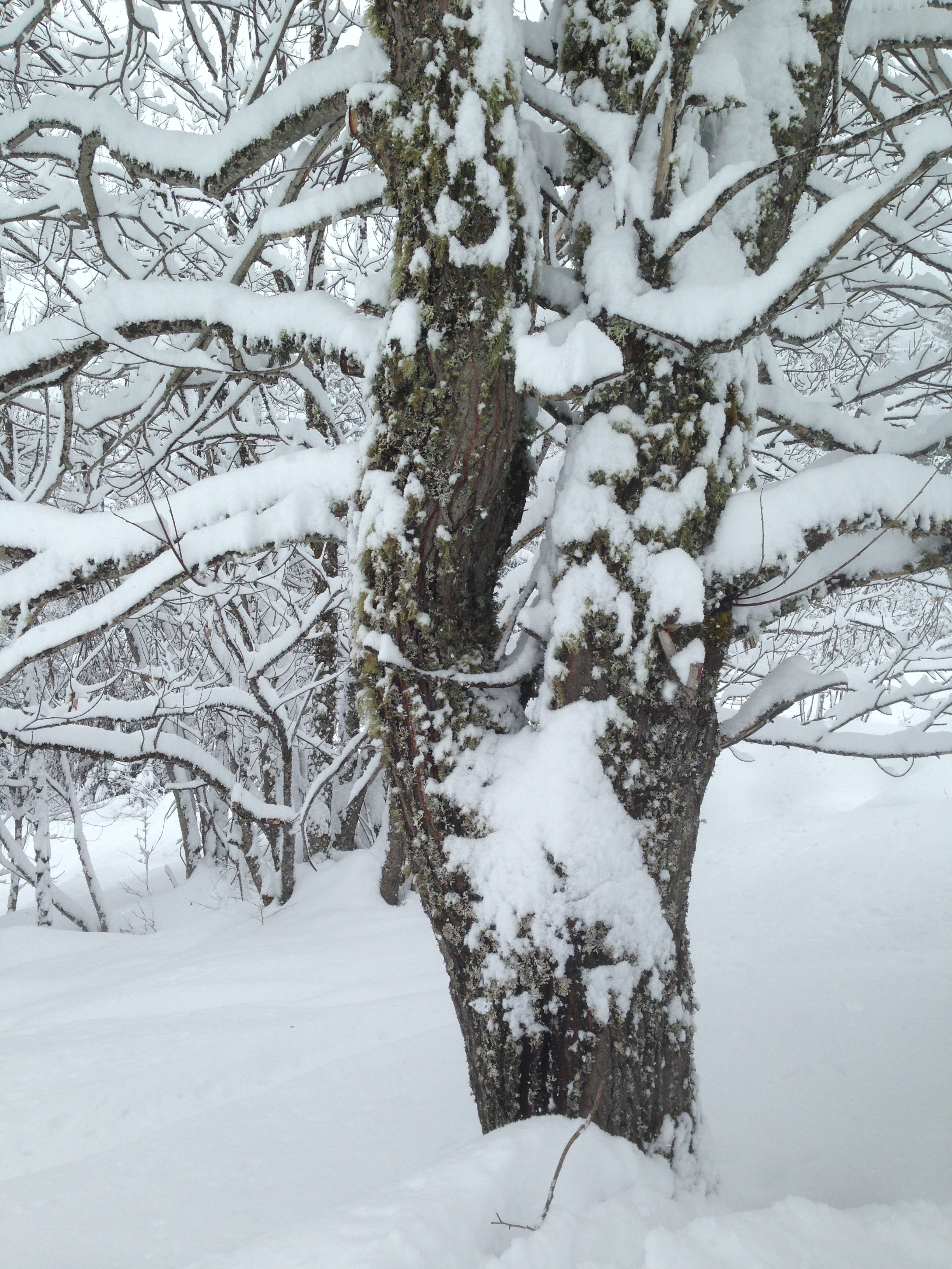 Pin it Like Image Pictures Trees In Winter Pinterest