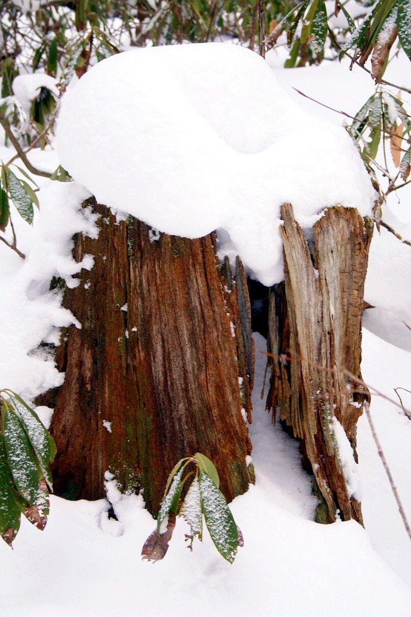 stump covered in snow | winter scenes | Pinterest