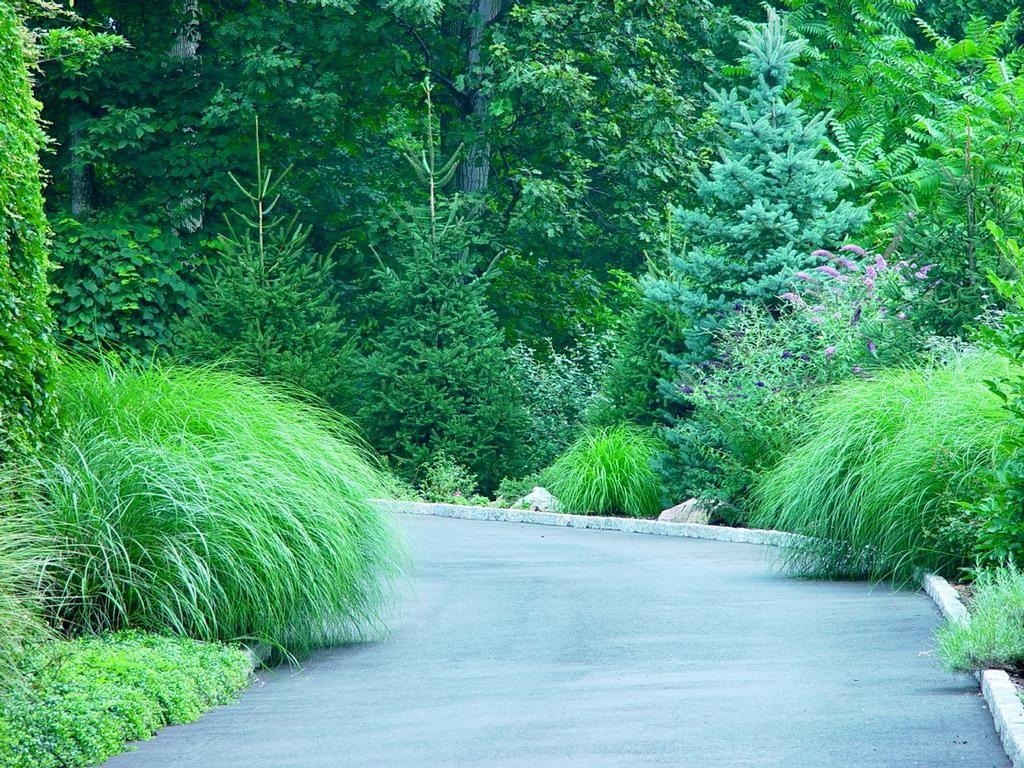 Ornamental grasses ornamental grasses and landscape for Ornamental landscaping