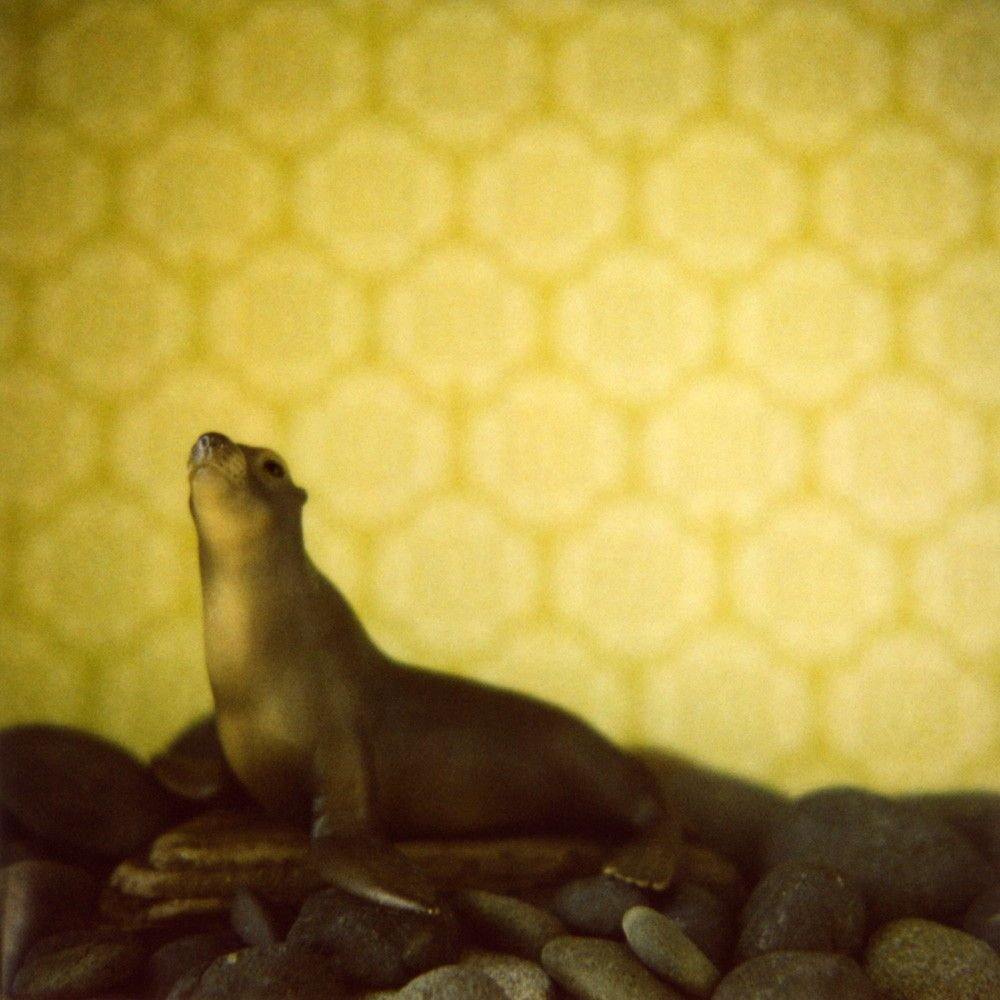 Little Zoo Prints | Seals, Otters, Manatees, Polar Bears | Pinterest