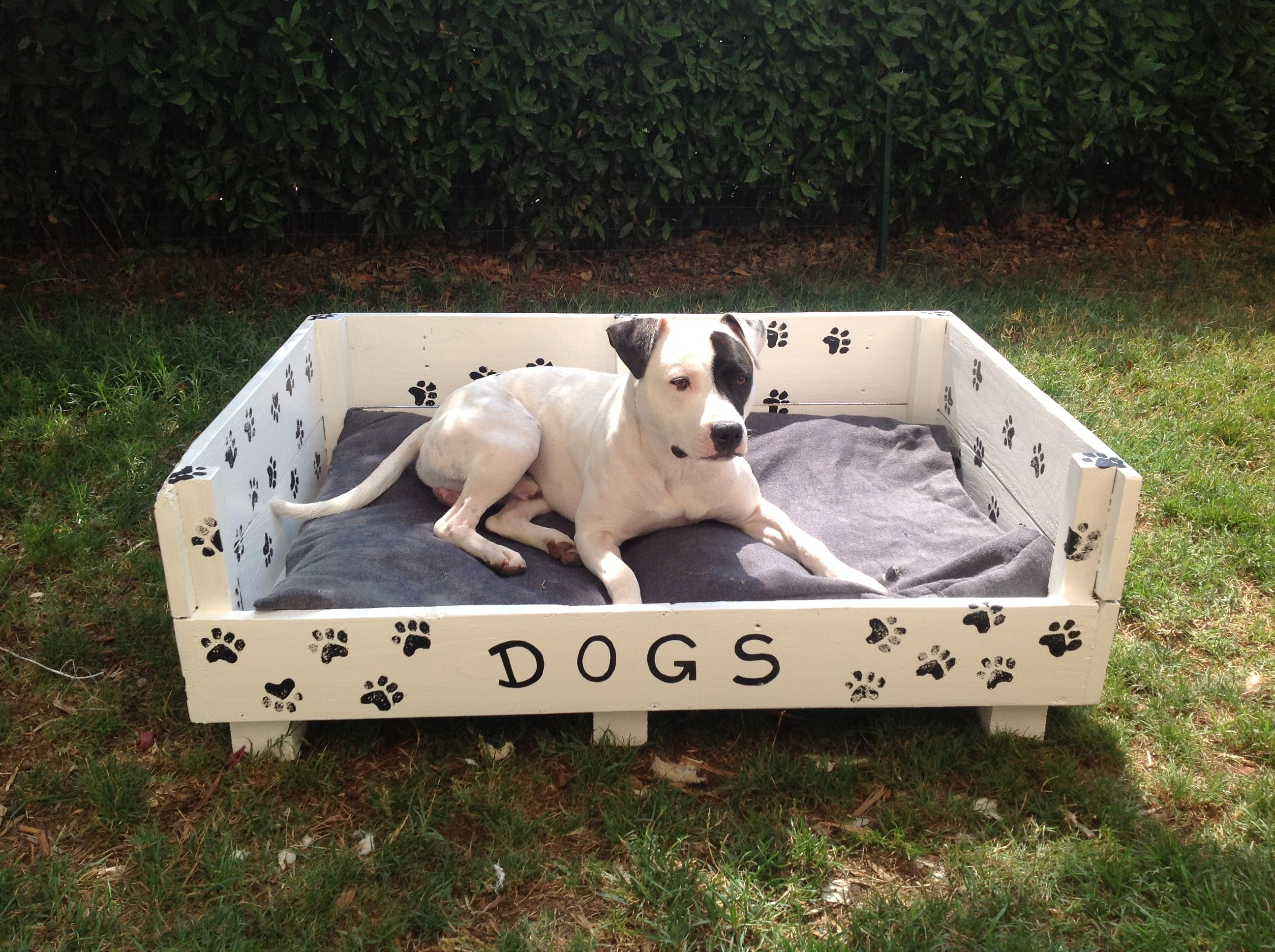 Cuccia per cani idee per il fai da te pinterest - Cuccia per cani da interno fai da te ...