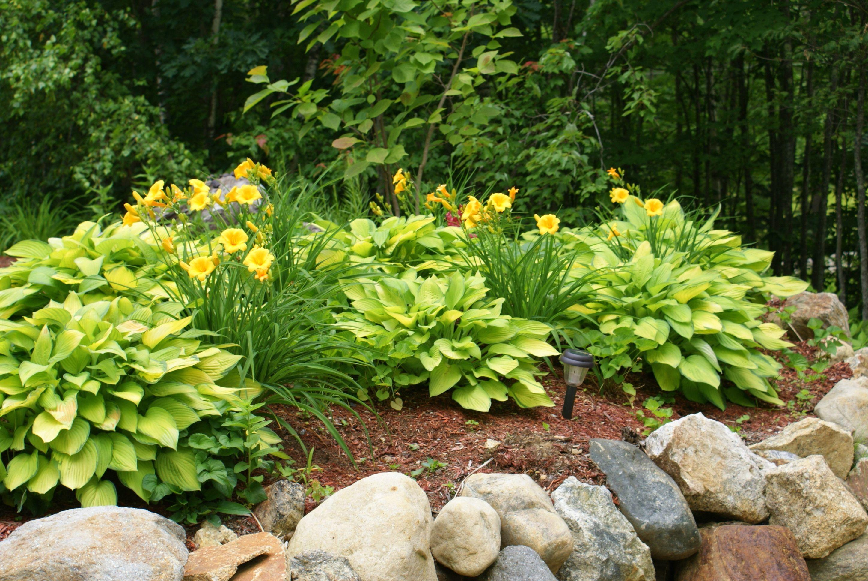 Hostas and daylilies garden ideas pinterest for Hosta garden designs