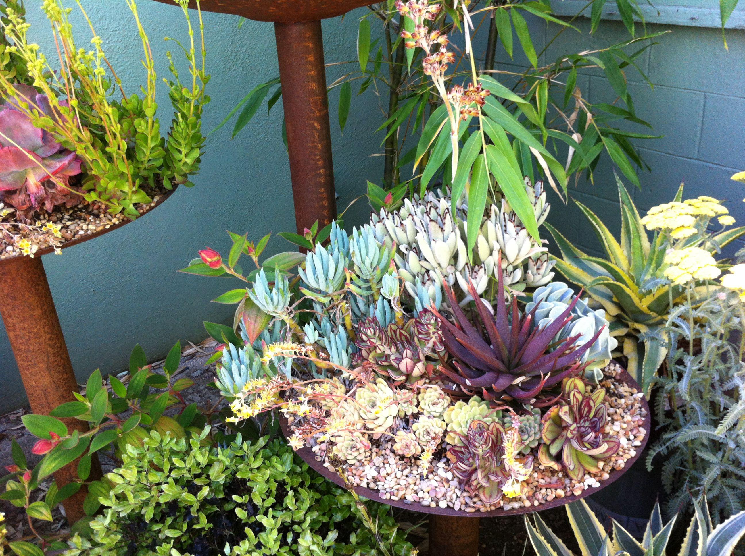 Succulent Ideas Garden Pinterest