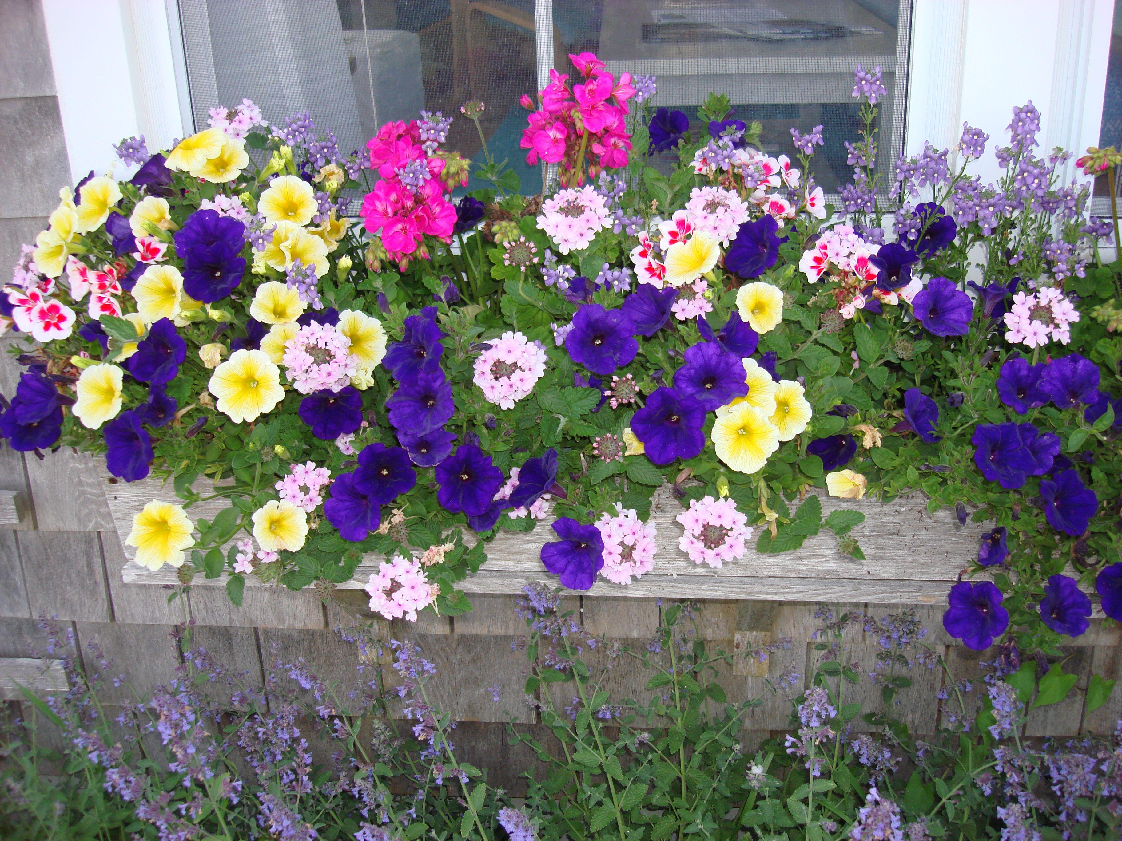 flower boxes flower boxes pinterest. Black Bedroom Furniture Sets. Home Design Ideas