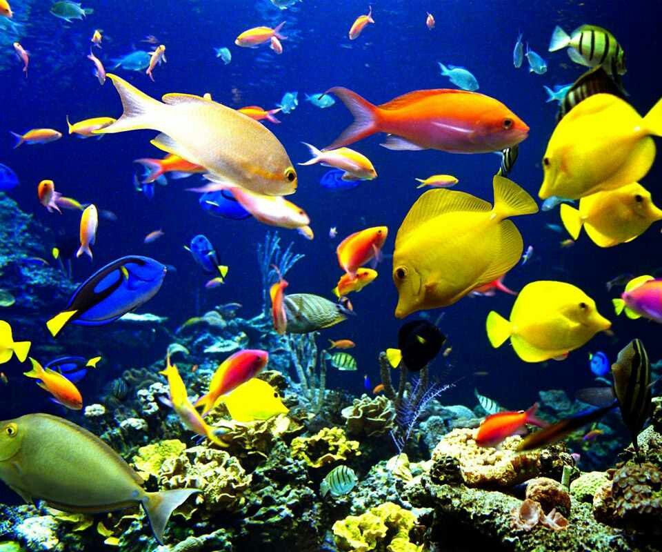 Colorful fish down under the sea pinterest for Fish under the sea