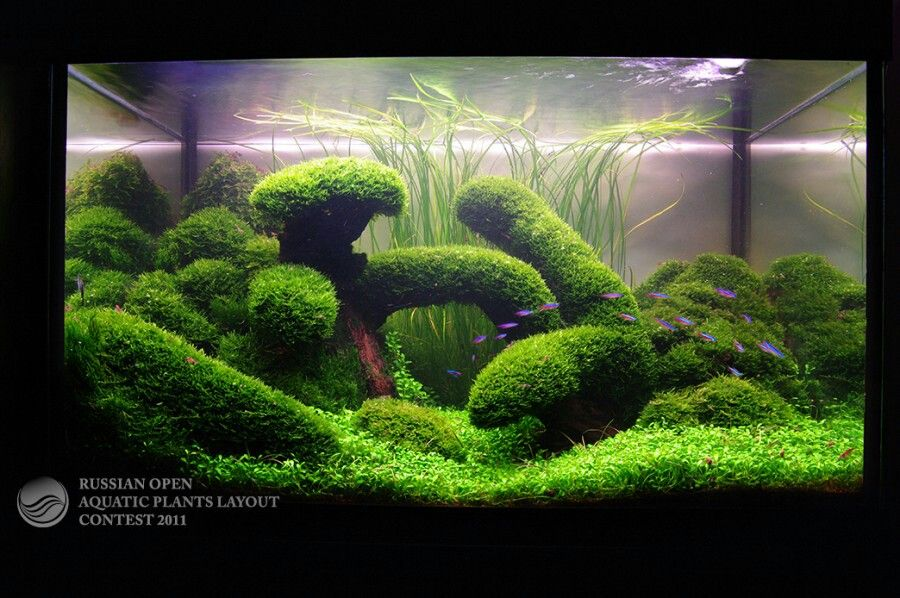 Aquascape with great use of moss Planted aquarium Pinterest