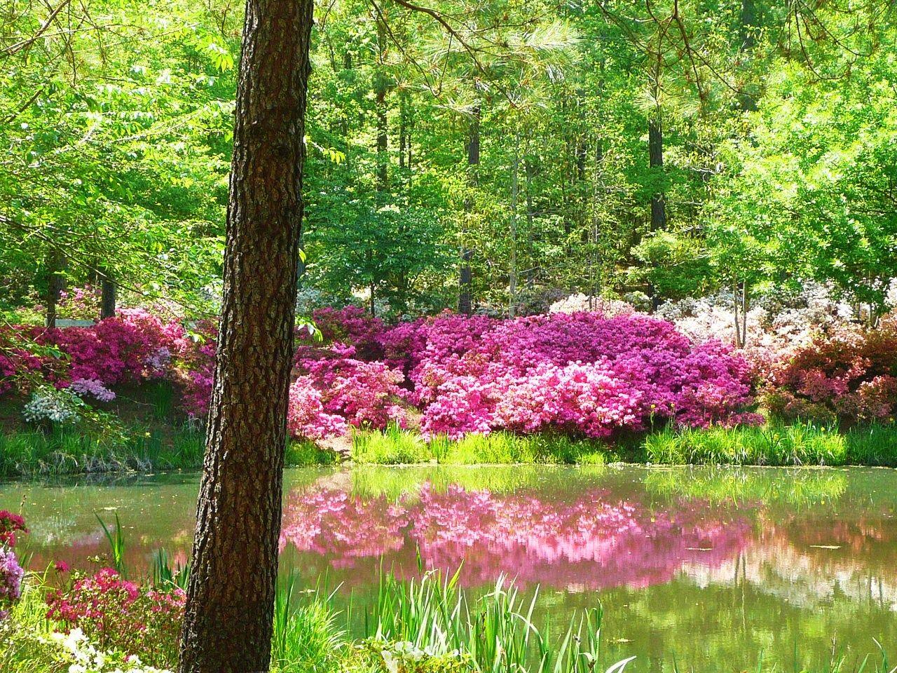 Callaway Gardens Pine Mountain Ga Places To Go