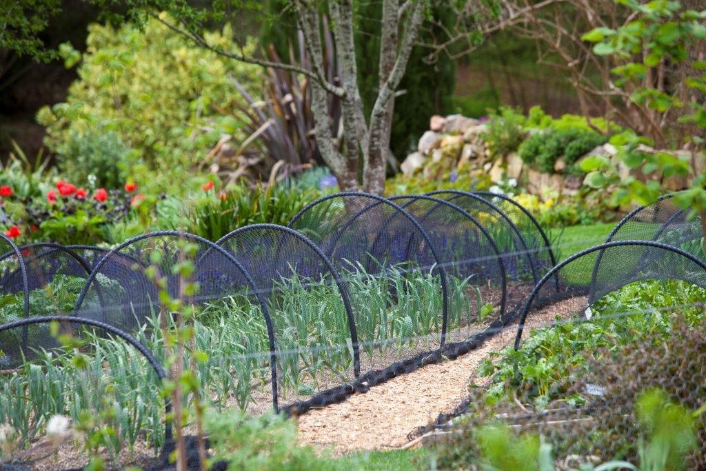 Outdoor veggie garden ideas photograph great vegetable pat for Vegetable patch ideas