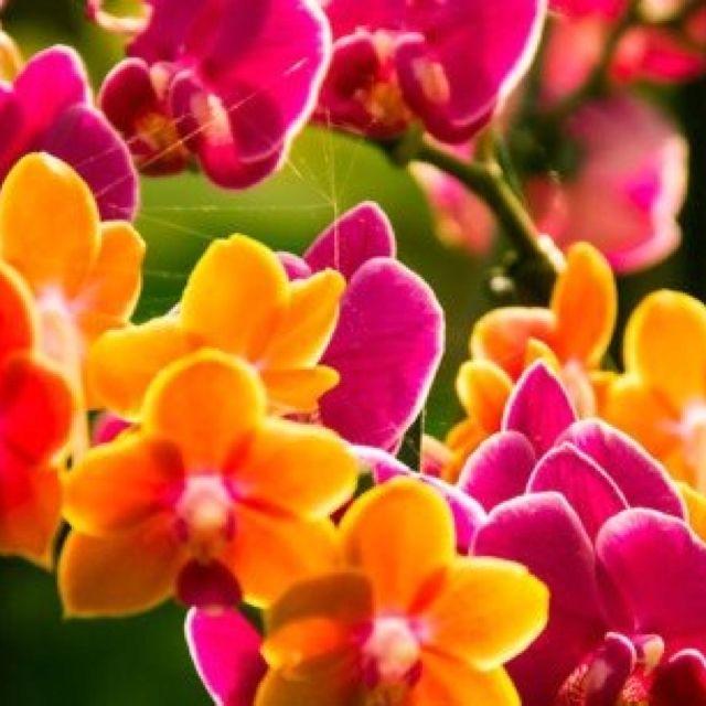 Colorful Beautiful Things Pinterest