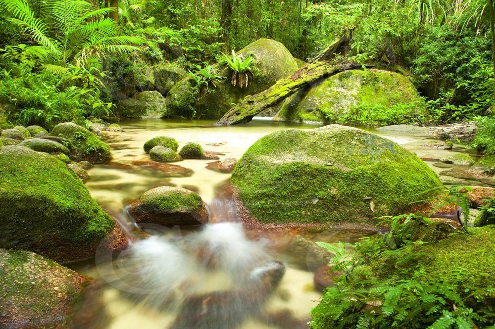 Daintree Australia  city photos : Daintree Rainforest Australia | Amazing Travel Photography | Pintere ...