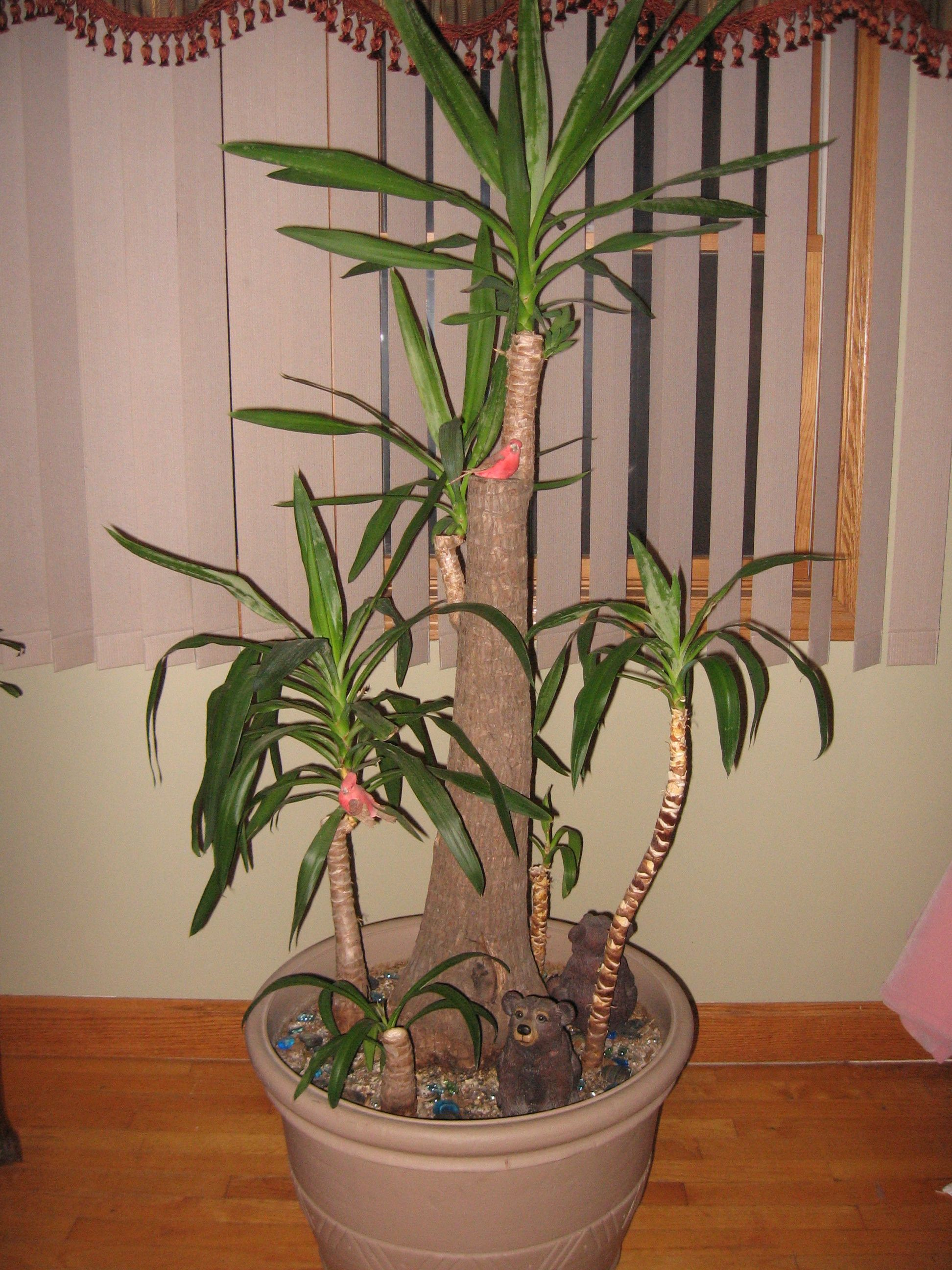Yucca Plant | My Grow Passion | Pinterest