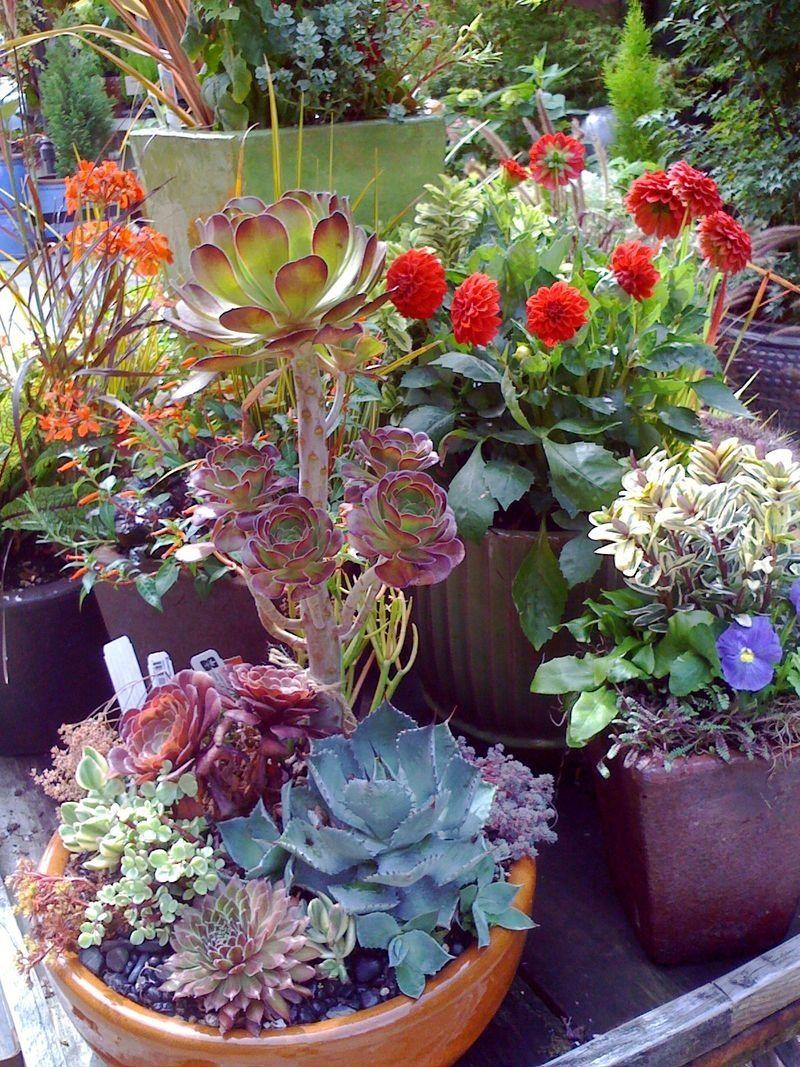 Container Gardening Succulents Garden Art Pinterest