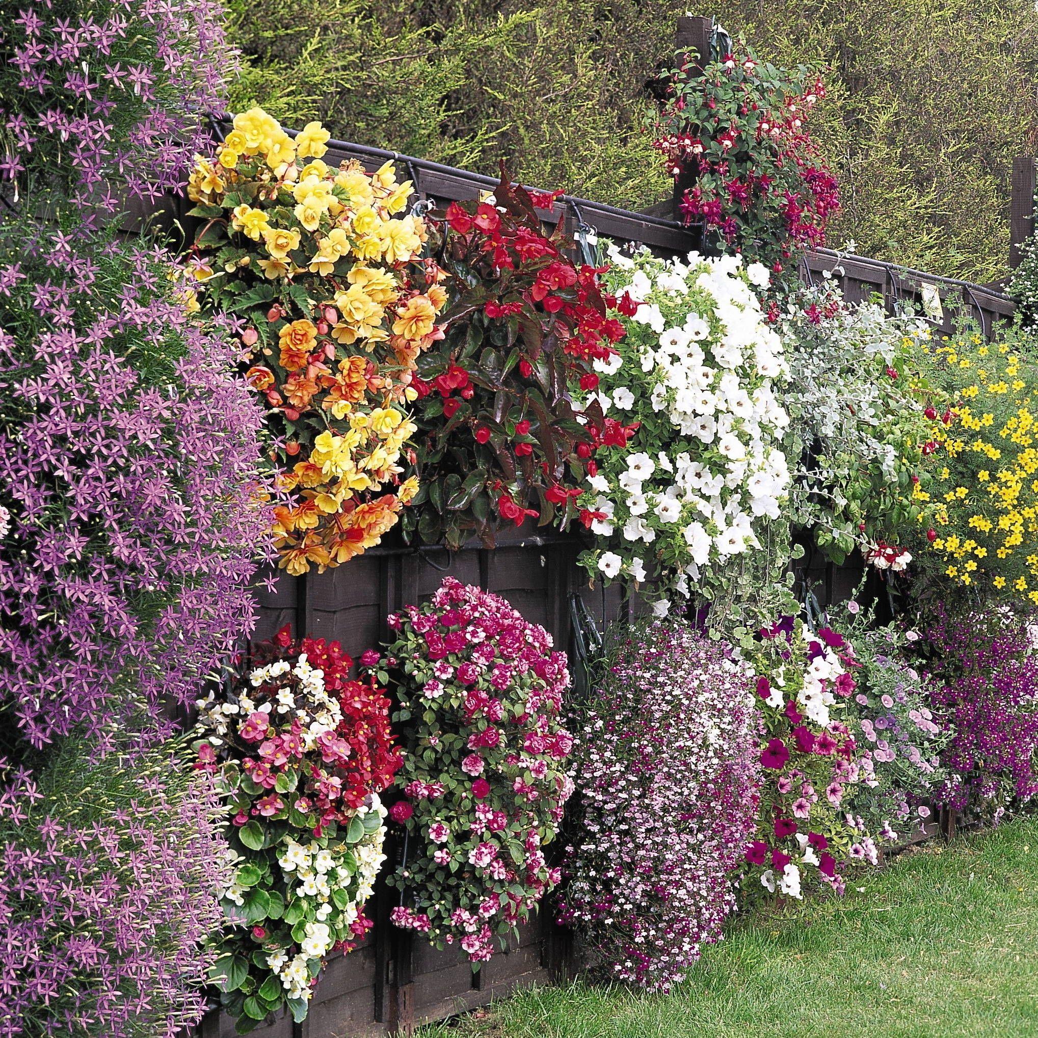 Многолетние цветы в вазонах на даче фото