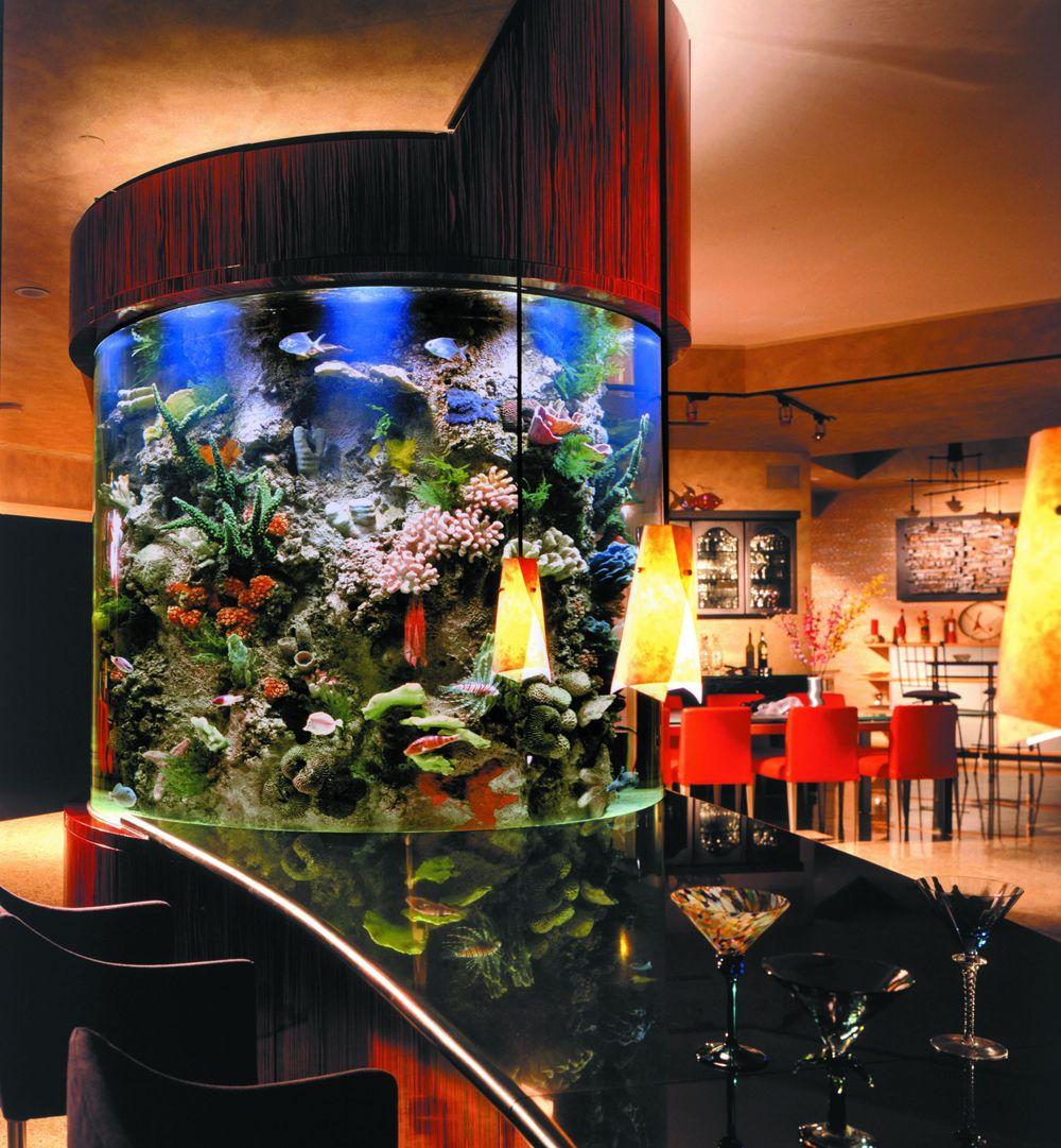 Man Cave Show Tank : Basement bar man cave fish tank dream home pinterest