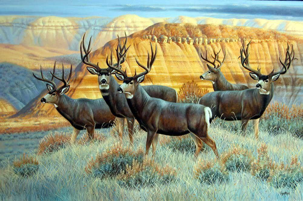 Mule Deer Art Gt Wildlife Pinterest