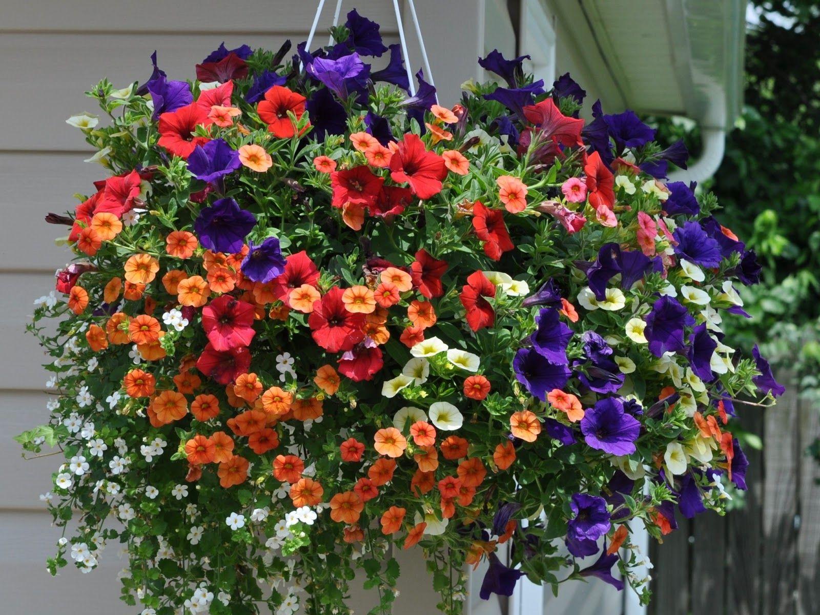 summer flowers hanging basket flowers pinterest. Black Bedroom Furniture Sets. Home Design Ideas