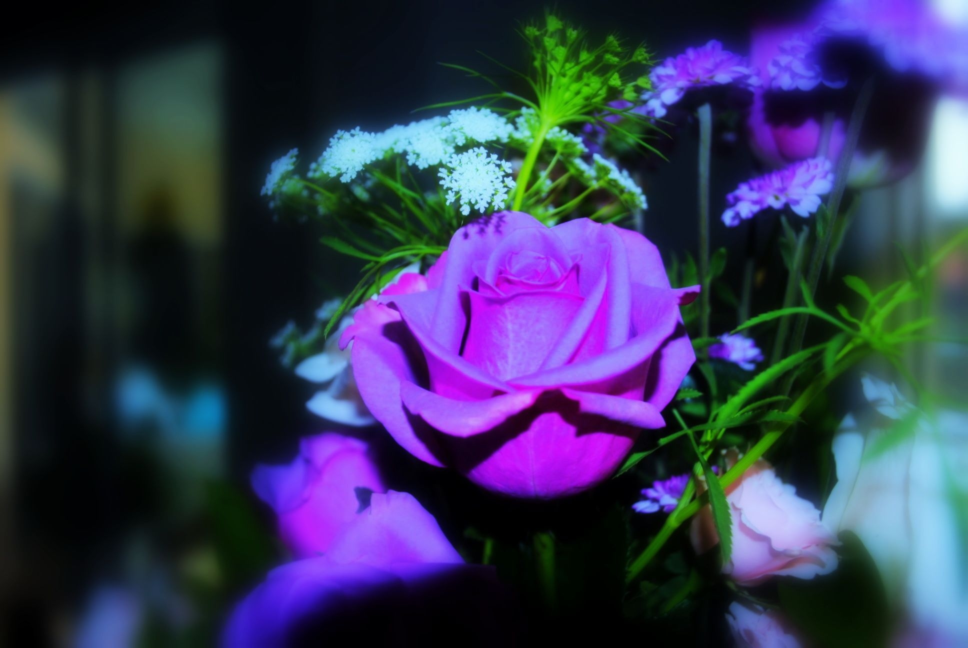 Dark purple rose   Serene Scenes by Sandra