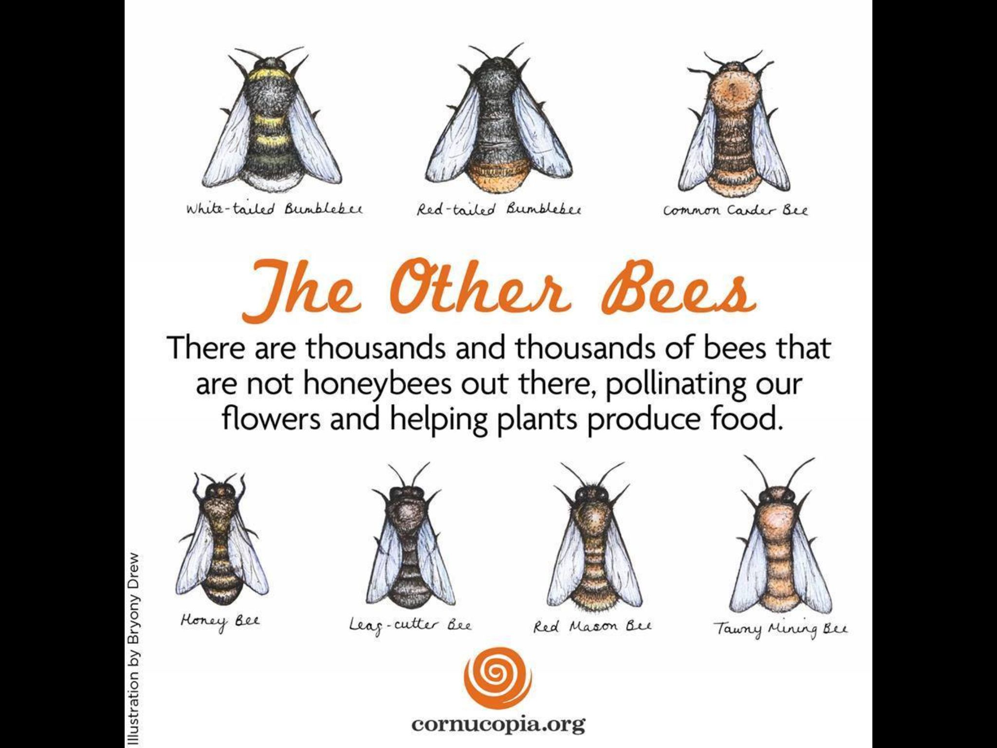 The different types of Bees ! | Honey Bees | Pinterest - photo#50