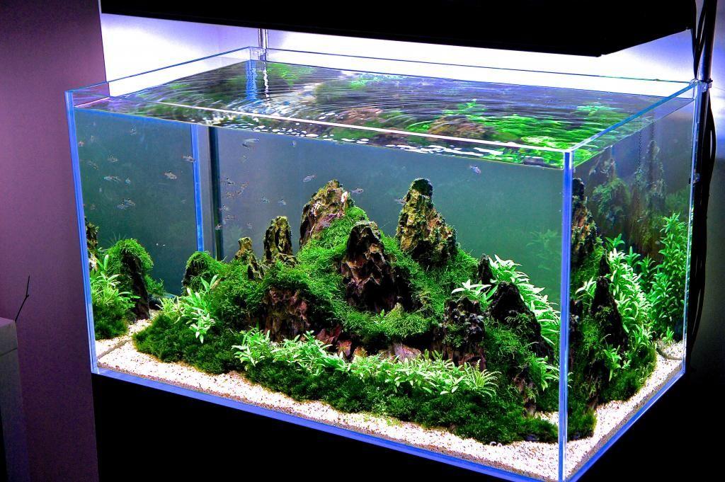 AQUASCAPE FRESH WATER AQUARIUM. Freshwater aquarium Pinterest