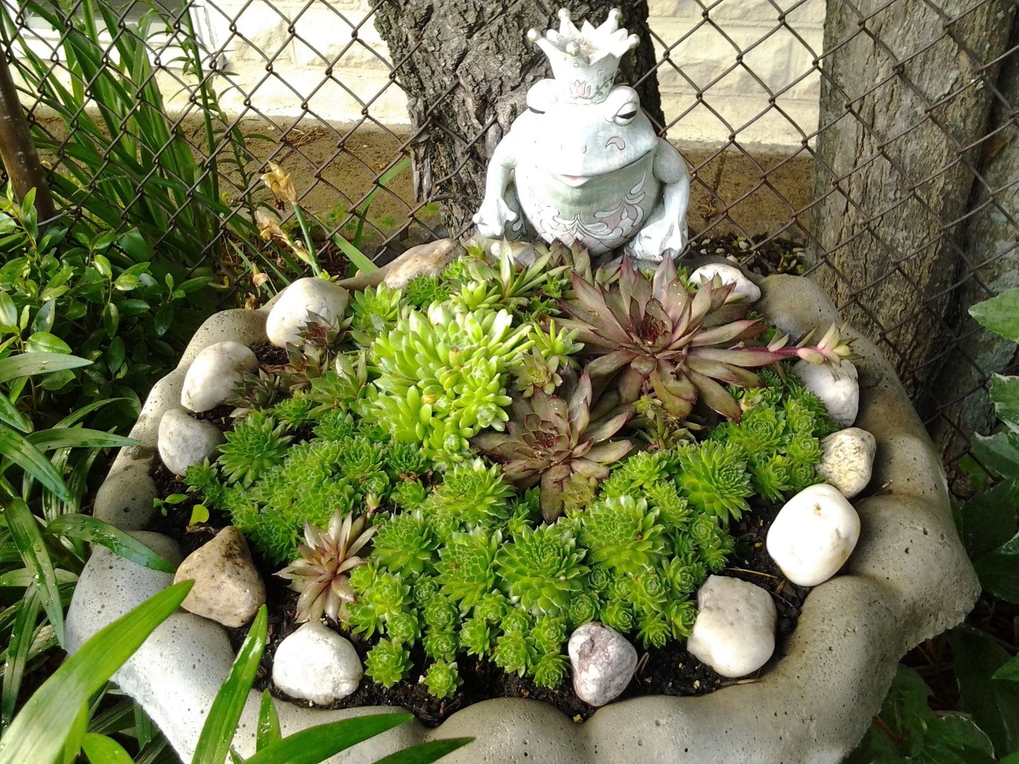 Frog Garden Home Decor Pinterest 640 x 480