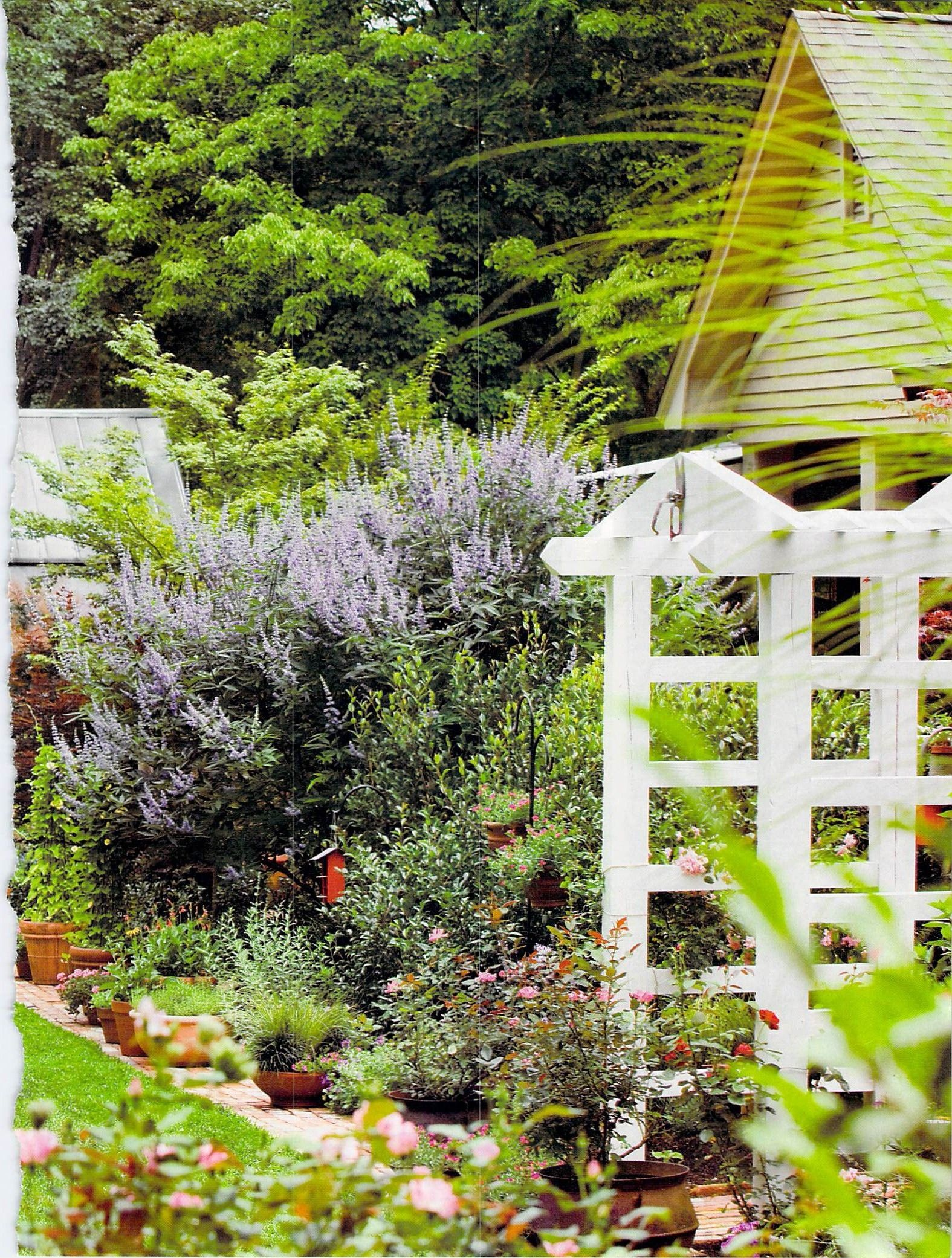 Pinterest Garden Privacy Ideas Photograph butterfly bush p