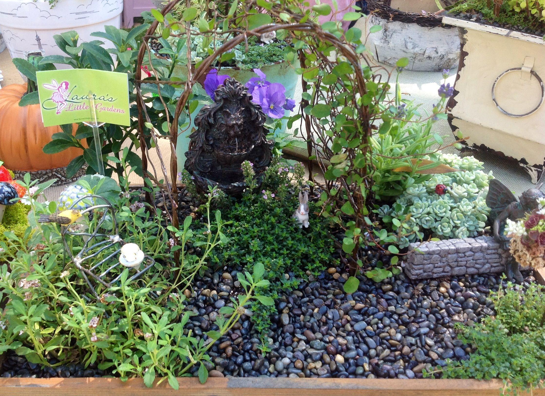 miniature fairy garden in a box outdoor pinterest