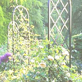 Free Standing Trellis For Climbing Roses Backyard