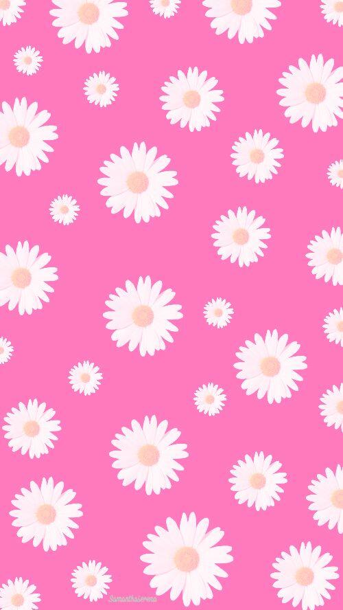 Pink daisies background