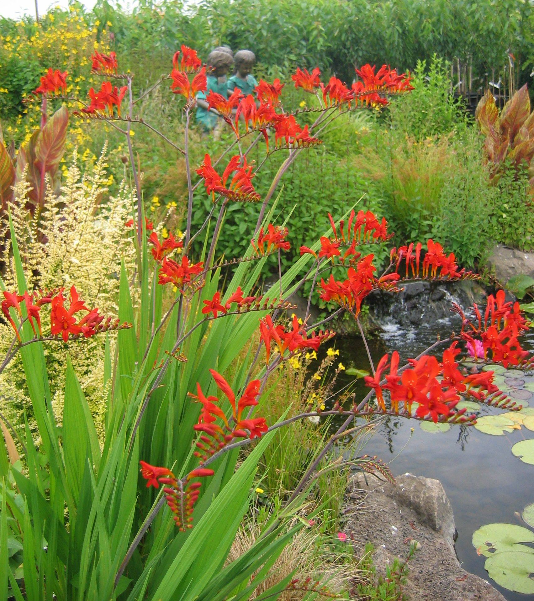 Crocosmia Around Pond A Little Bit Of Every Thing I Like