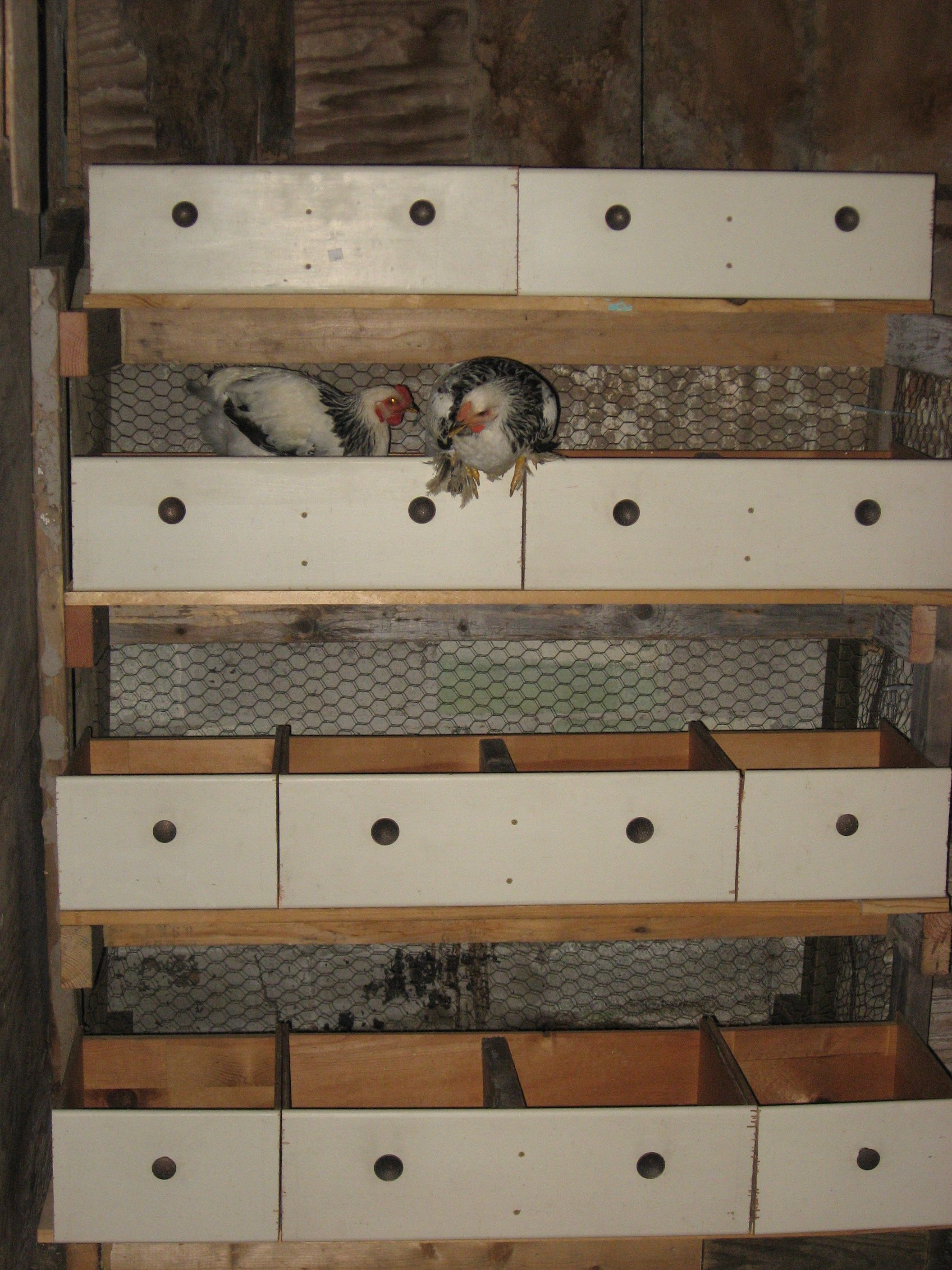 Savvy Housekeeping » 5 Recycled Chicken Nesting Boxes