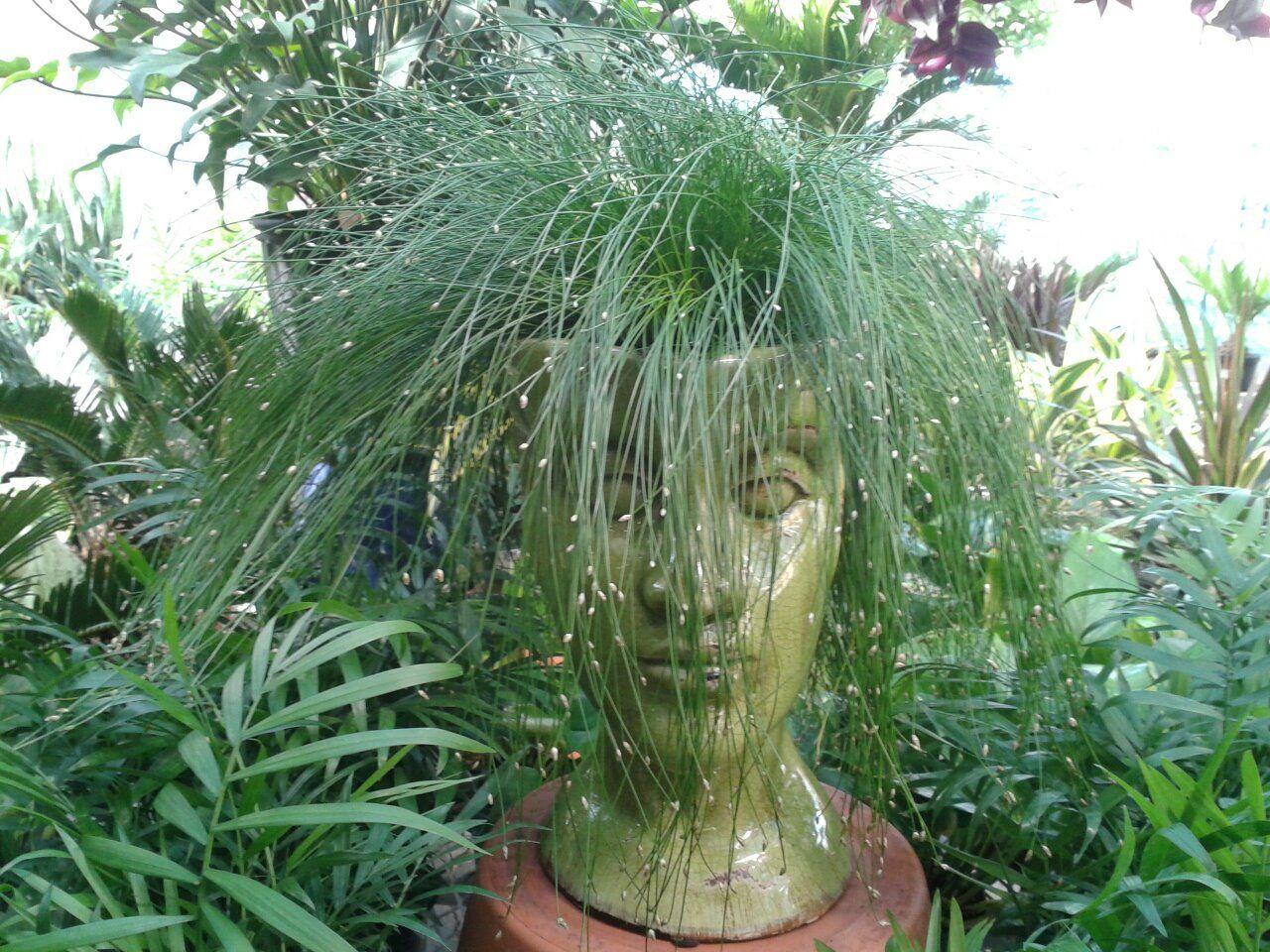 Unique Planter Gardening Pinterest
