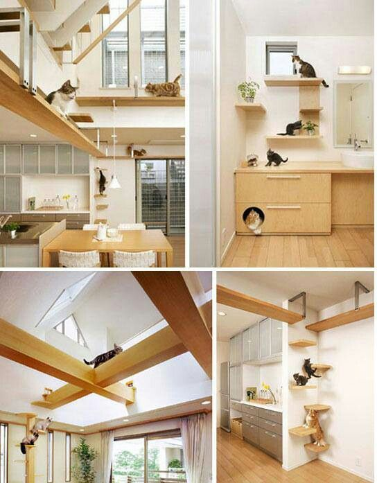 puurrrfect interior design how to make a cat friendly home