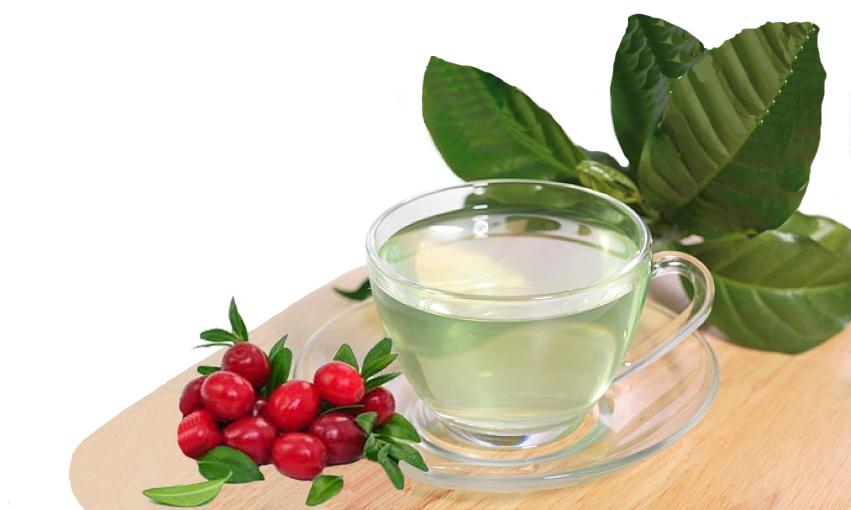 Té de hojas de arándano