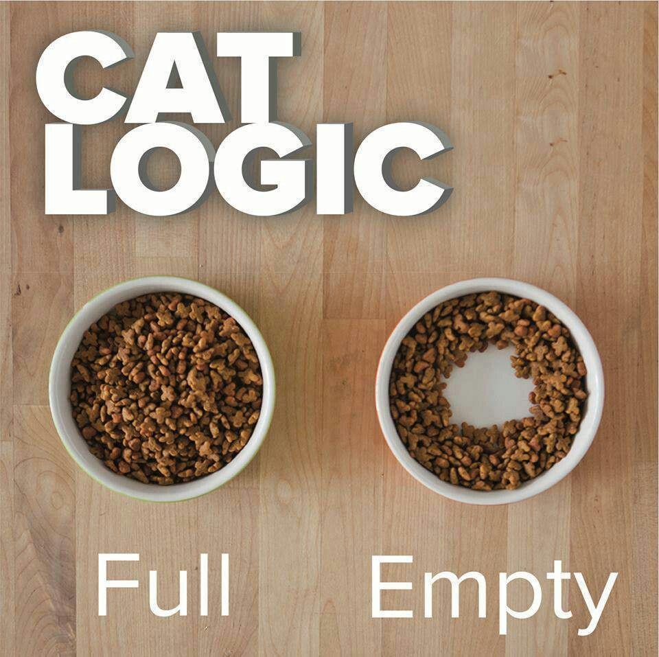 Cat Empty Bowl Meme