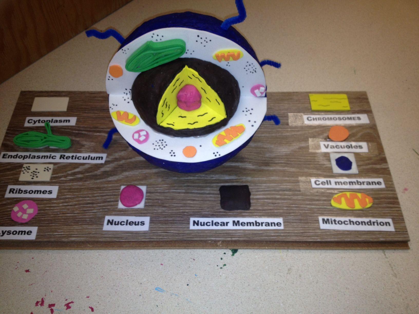 Модель живой клетки своими руками