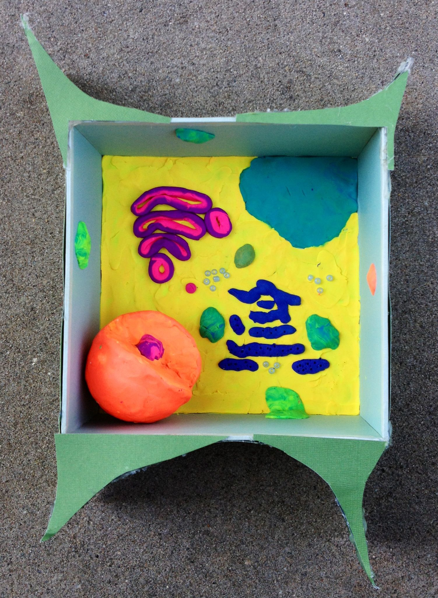 Plant cell model for kids to make