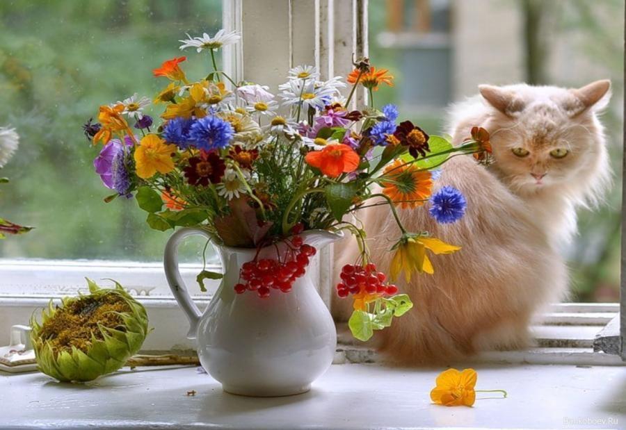 Résultat d'images pour Beaux bouquets de violettes