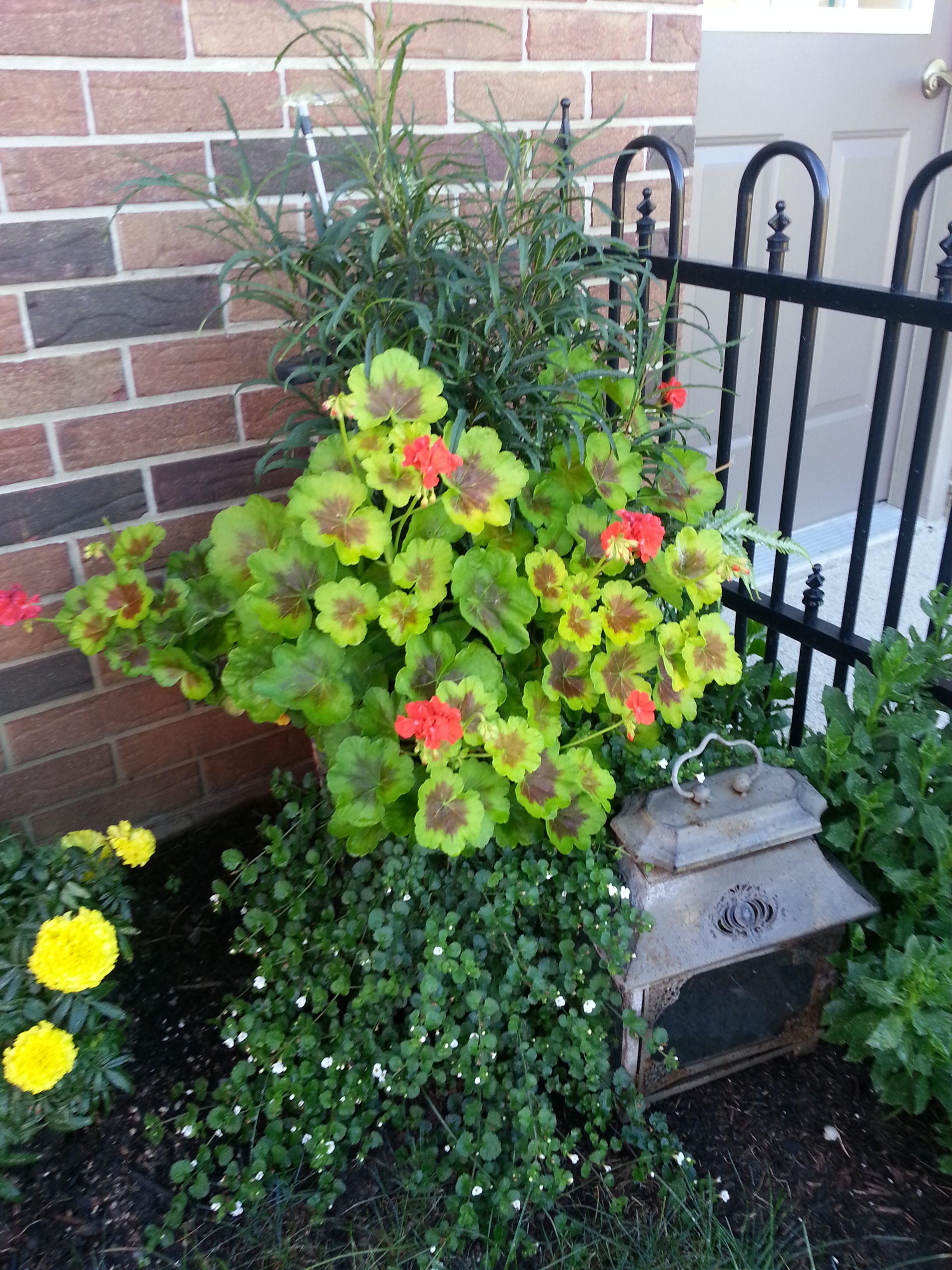Container plant garden ideas pinterest for Garden designs pinterest