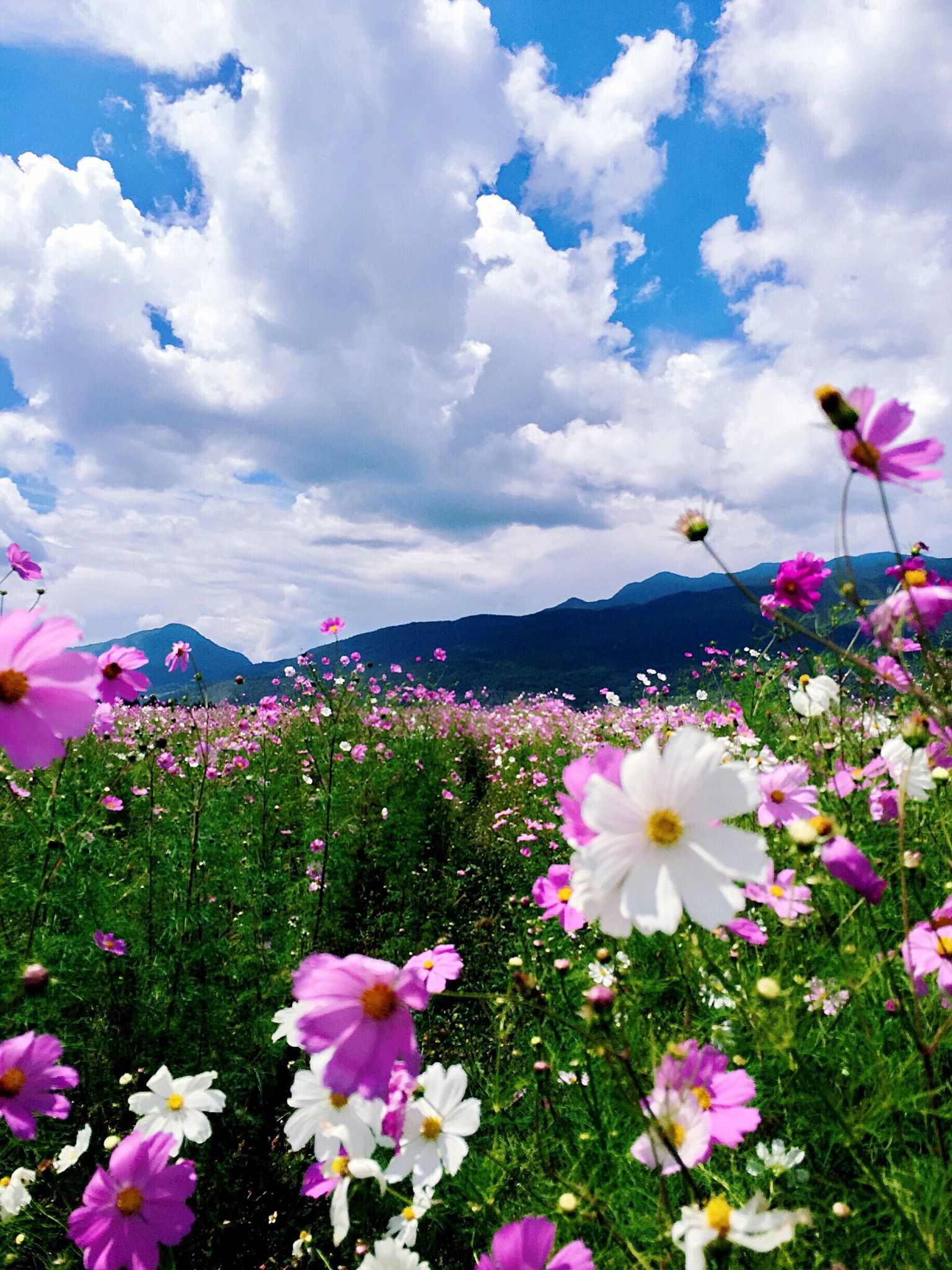Beautiful scenery images with flowers simplexpict1st into the wild pretty nature flowers scenery and izmirmasajfo