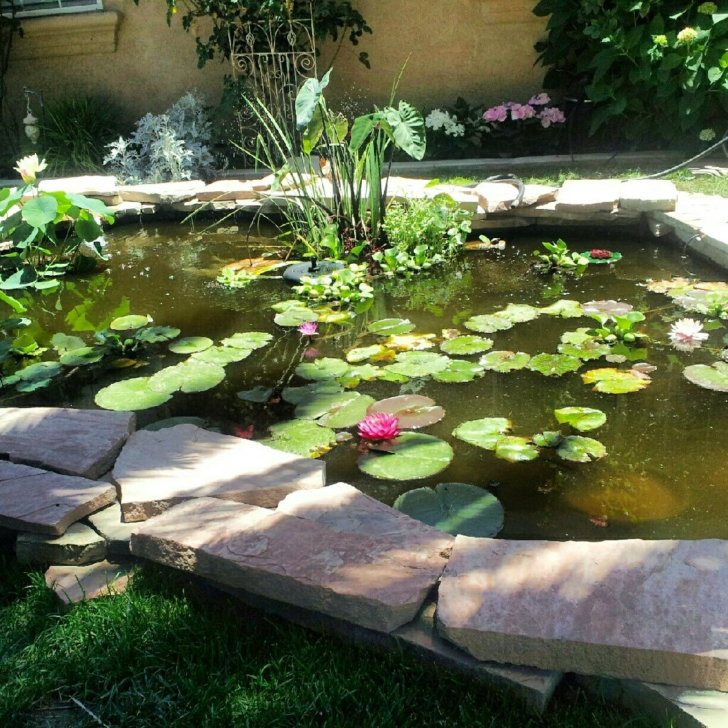 Front yard pond ideas for Front yard fish pond