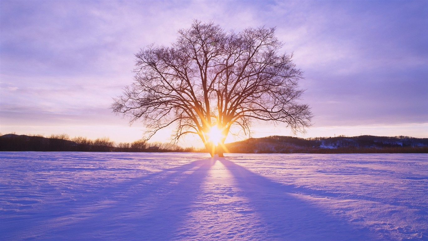 Beautiful Winter Sunrise | Winter's Wonderland Whispers ...