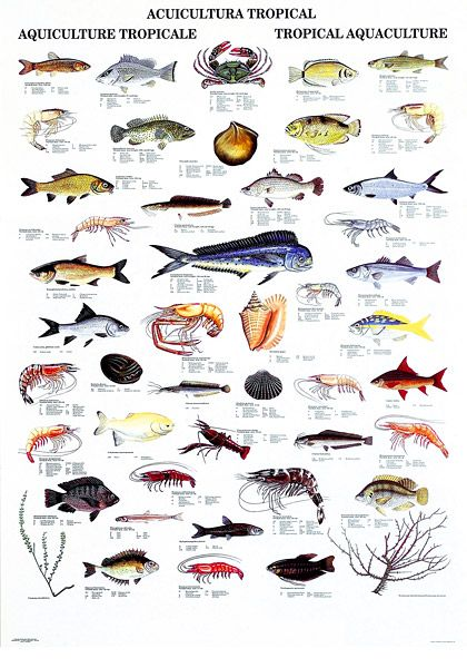 Underwater animals with names