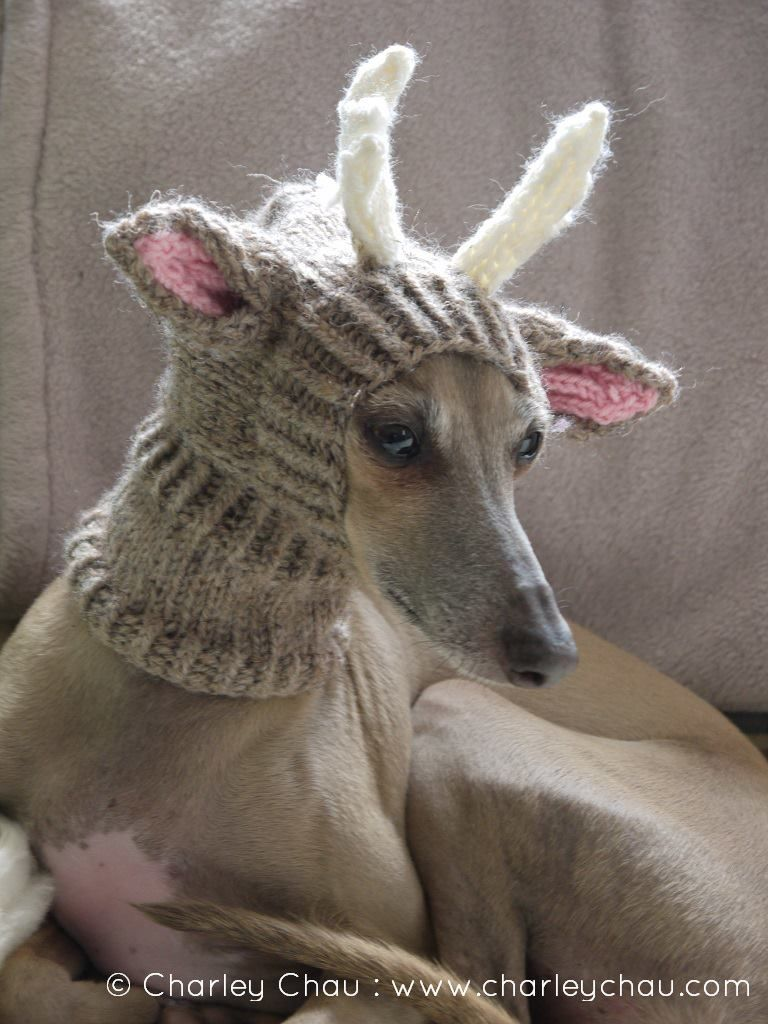 Knitting Pattern For Reindeer Hats For Dogs : Pin by Debbie Segnini on Sight hounds Pinterest