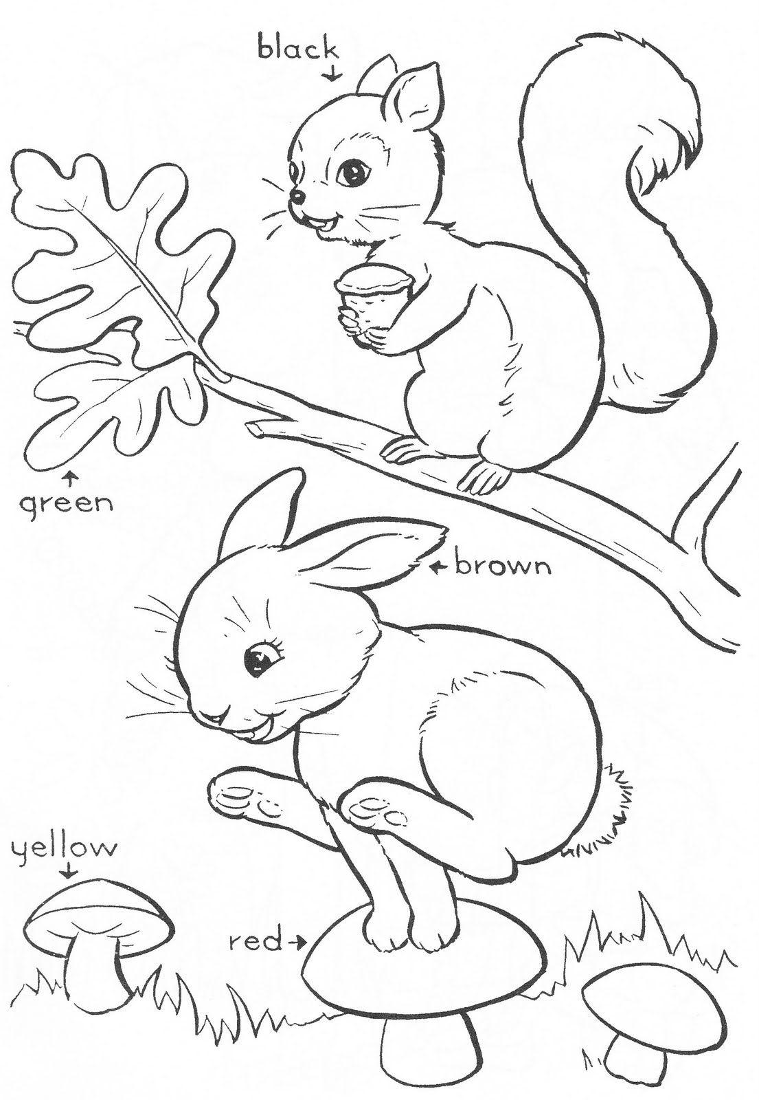 bluebonnet coloring page coloring pages