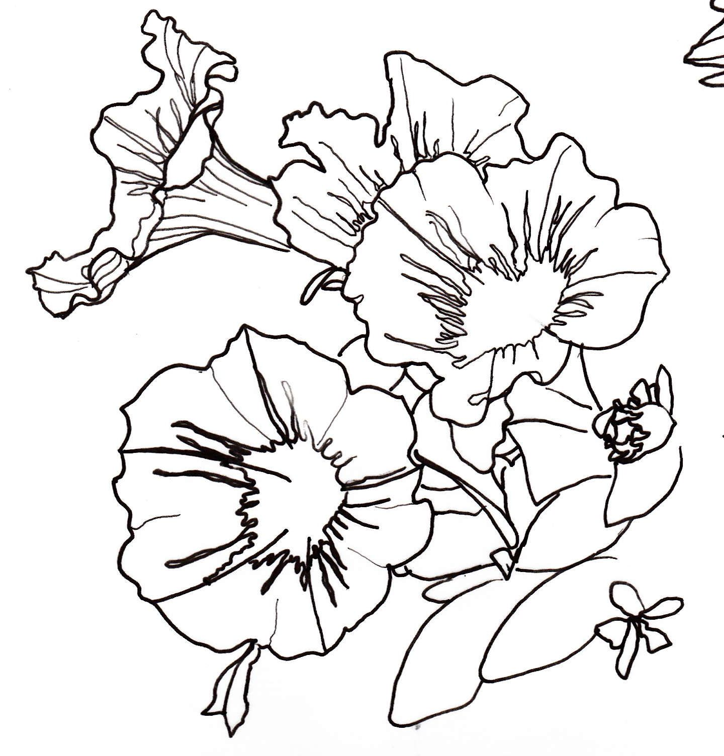 Line Art Plants : Line drawing flowers pinterest