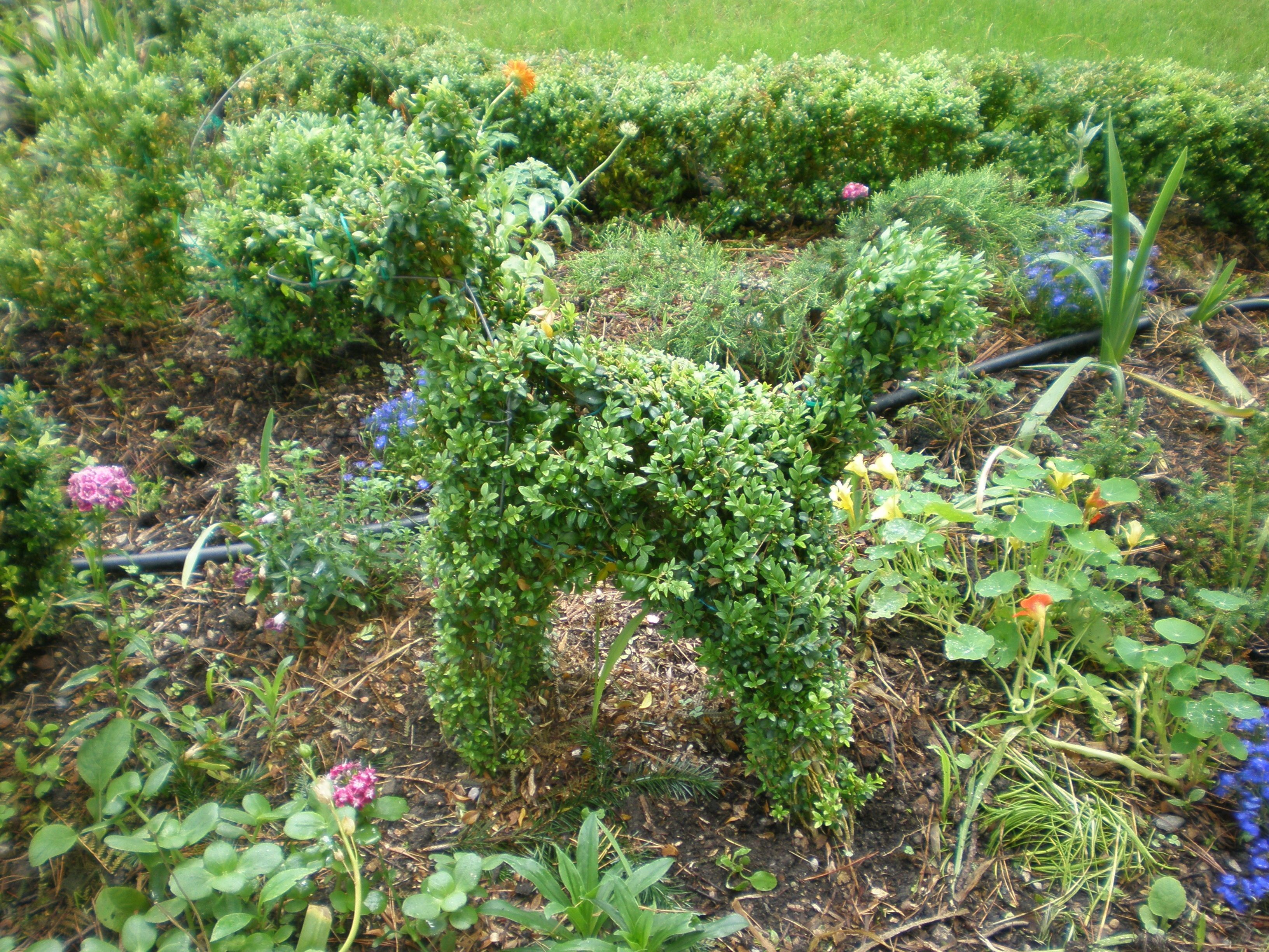 Dog Friendly Backyard Ground Cover : Pin by Thorngrove Manor on Fairytale Gardens at Thorngrove Manor www